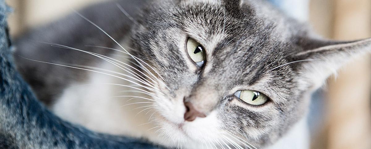 dierenvakantieland kattenhotel
